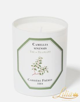 Luxury scented candle Carrière Frères Tea plant